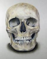 Skull by DMartIT