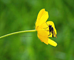 Yellow by Nataschaa