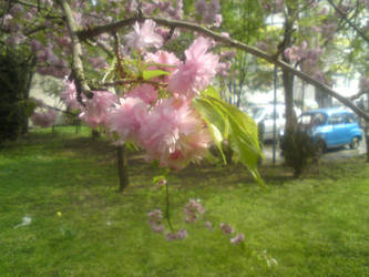 Springtime Again by Manthur