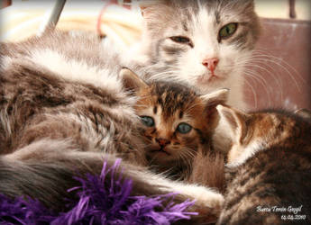 Nature of Cats_04 by princessfromsea