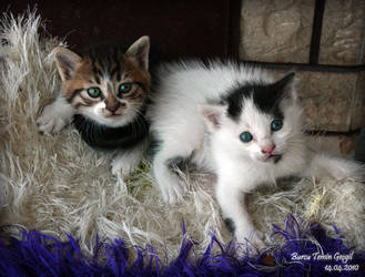 Nature of Cats_05 by princessfromsea