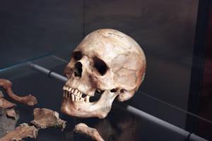 Roman Skull No2 by Topaz172