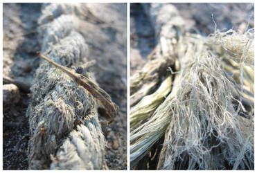 rope on a path by a lake by kayne