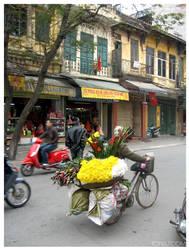 Hanoi: Flowers for sale by kayne