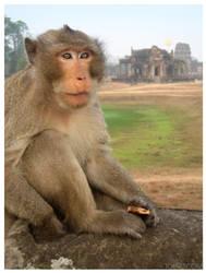 Angkor Wat Monkey by kayne