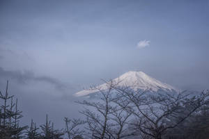 Fujisan in the morning by djooleean