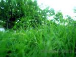 Vista Natural Lawn at Khairpur by rameexgfx