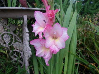 Flower of Sweet Innocense by Thestar78956