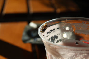 Wasp drinking beer by Nishi199