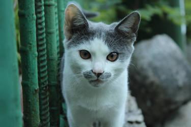 Cat by Nishi199