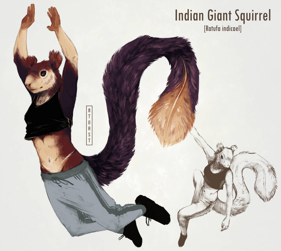 _adopt__giant_squirrel_design_by_8toast_dc0xqzw-pre.jpg