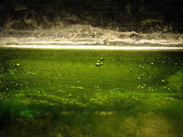 Algae in aquarium by MAKY-OREL