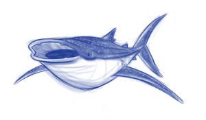 Whale Shark by Sibsy
