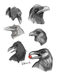 Ravens by Sibsy