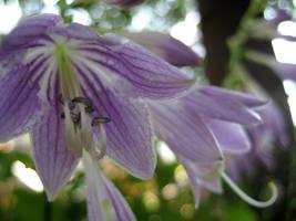 Purple Impatients by Verdaera