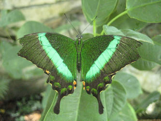 Neon Green Butterfly by Verdaera