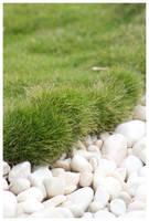 grass by kymw