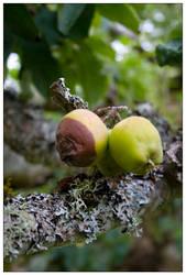 an apple a day? by kymw