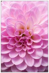 in the garden 010 by kymw