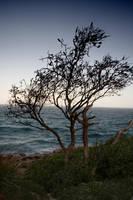 Tree by sea by kymw