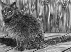 Cat In Black by FelesTacita