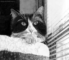 I'm Watching You... by FelesTacita