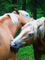 horsies by JulchenBunny