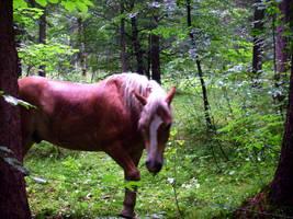 horse2 by JulchenBunny
