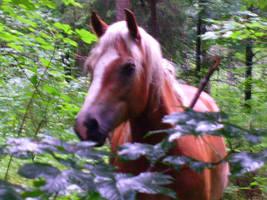 horse4 by JulchenBunny