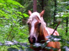 horse5 by JulchenBunny