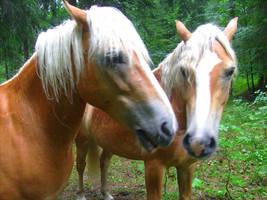 nice horses by JulchenBunny