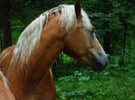a horse2 by JulchenBunny