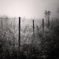 Fog I by Jez92
