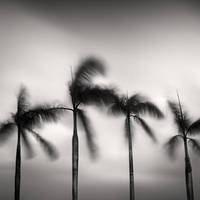Four Palm Trees by Jez92