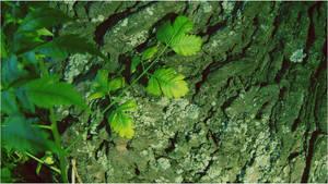 Green Leaves III by Iseeyoulaterboi