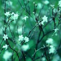 Green dreams by B-ereza
