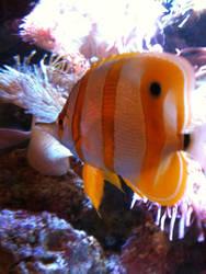 Fish in a Tank by darkpixie1696