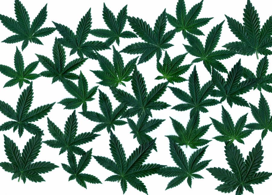 Cannabis Leaves 02 by transmitdistort