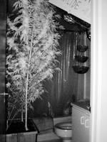 Cannabis Can IR Nightvision Flash by transmitdistort