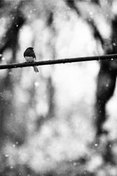 Snow Sparrow by brayden1313