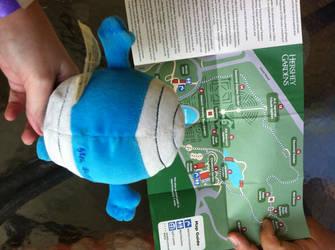 Mr. Bump reading the Hershey Gardens Map by hershey990