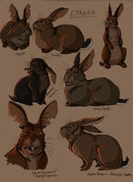 Rabbits of Efrafa by LadyFiszi