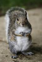 Feed me, I'm cute by MicWits101