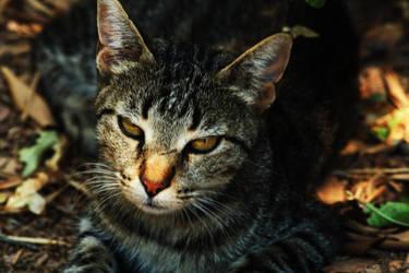 kitty Kat...... by zelenen