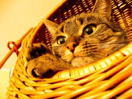 Yellow cat by badzia90