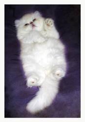 Purr-fect cat by Mefistofelicat