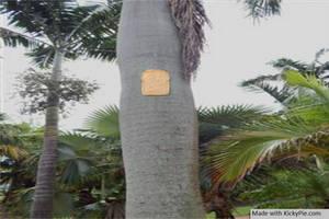 Bread Stapled to a palm tree by KickyPie