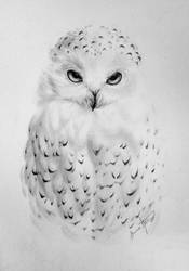 Snowy owl by makebelief