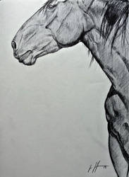 Horse by Ghost21501