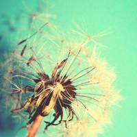 summer wish by tangleduptight